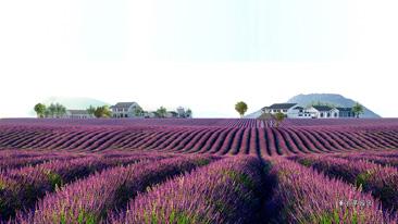 相约幸福嵖岈,体验紫色浪漫之旅