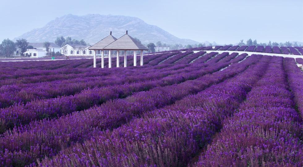 花花世界 - 嵖岈山风景名胜区